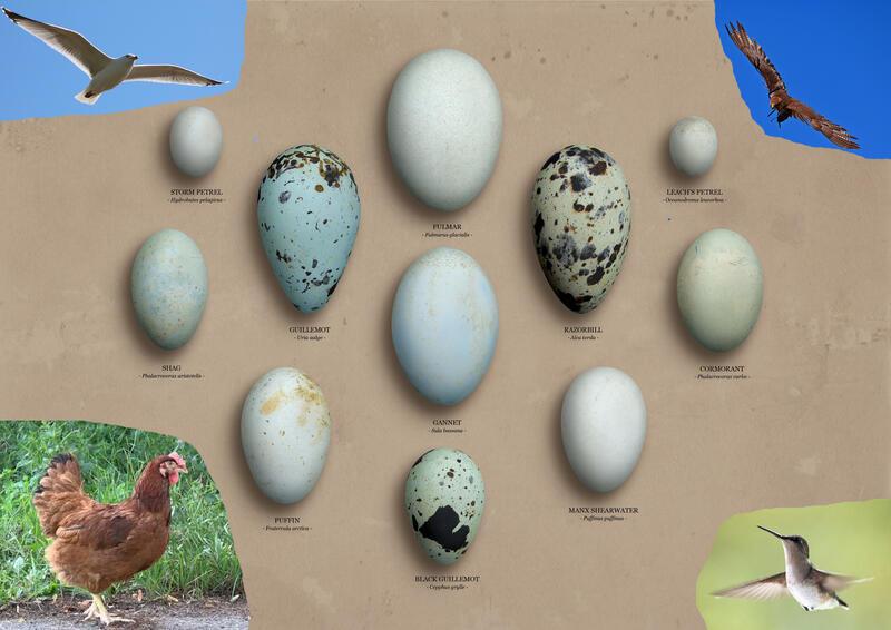 10 Completely Bizarre Bird Facts  Listverse